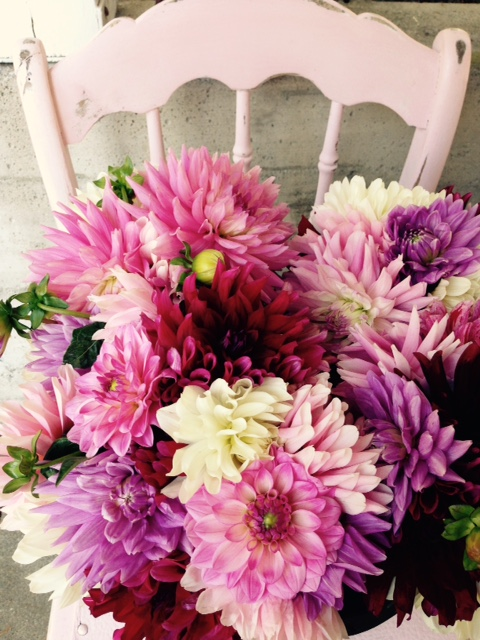 #channeling the dahlia