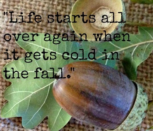 ~ F. Scott Fitzgerald