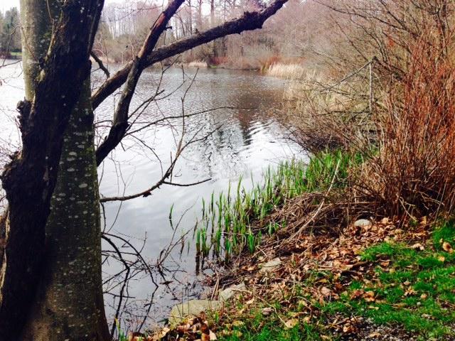 Lake view_3
