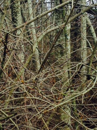 Trees at CLake