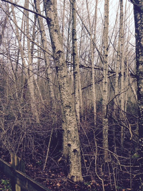 Trees- CLake_8
